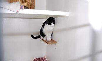 Box spacieux pour votre chat