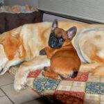 Pension familiale pour chiens