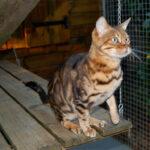 Pension pour chat Les P'tits Lihou
