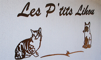 Pension pour chats Les P'tits Lihou