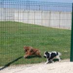 Service promenande des chiens